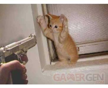 Chat_pistolet